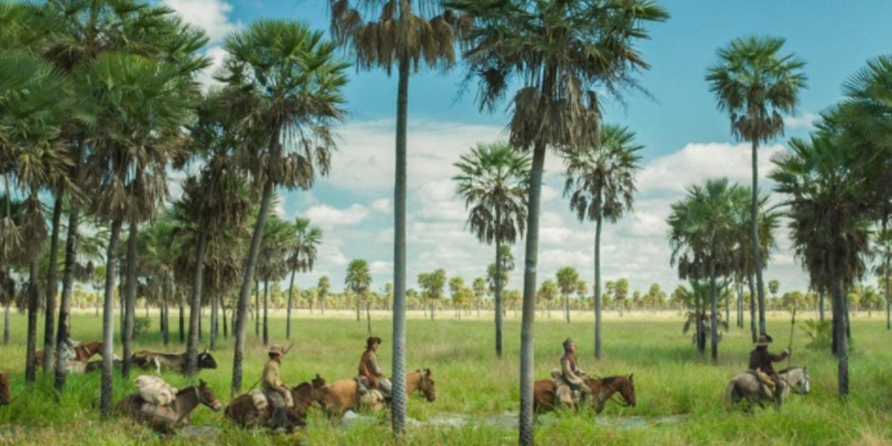 um grupo de cavaleiros atravessa um charco em meio a palmeiras.